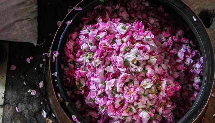 Rose Water - Kashan