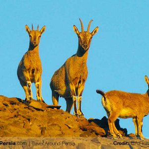 Nature and Wildlife Tour-Abbas Abad Wildlife-TAP Persia