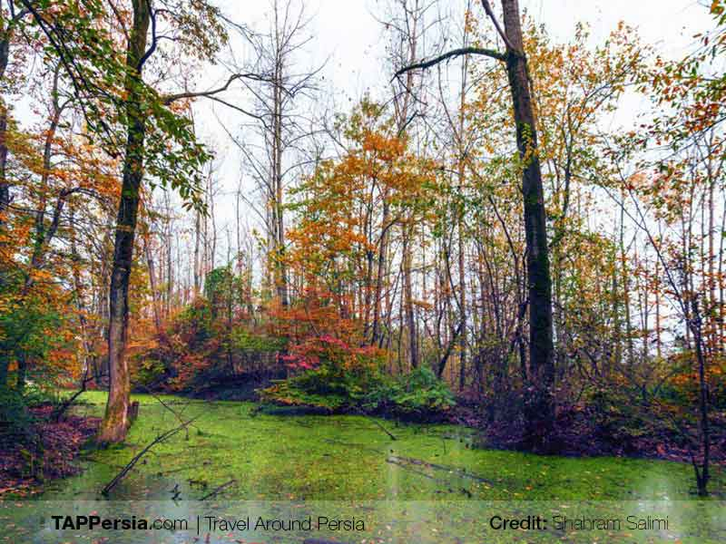 Saravan Forest Park - Rasht, Gilan