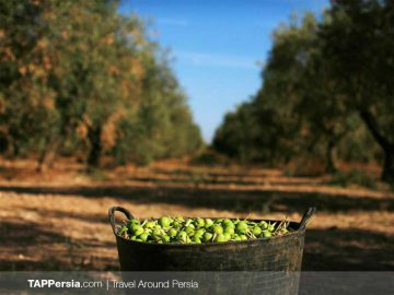 Gilan Commodities (Olives,-Tea-&-Rice)-Rasht Souvenirs-TAP Persia