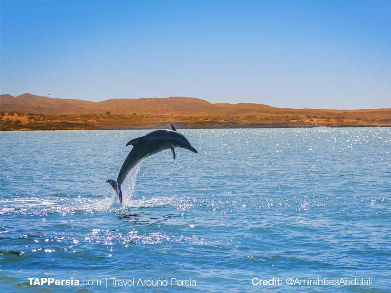 Hengam Island-Qeshm Nature-TAP Persia