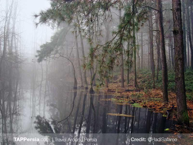 Saravan Park-Rasht Nature-TAP Persia