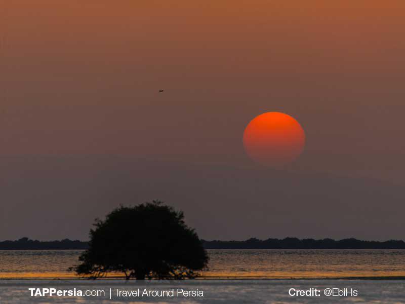 Harra-Sea-Forest-Qeshm-Nature-TAP-Persia