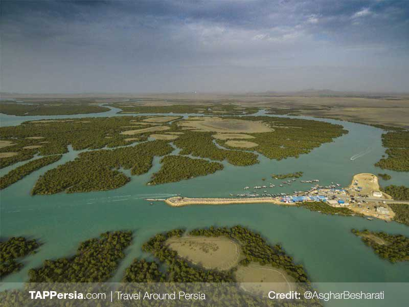 Harra-Sea-Forest-Qeshm-Nature-TAP-Persia