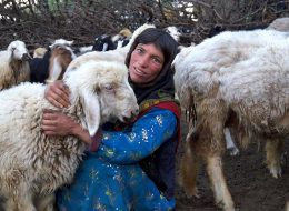 Kooch Tour, A Nomadic Life Experience - Nomad Tours - TAP Persia
