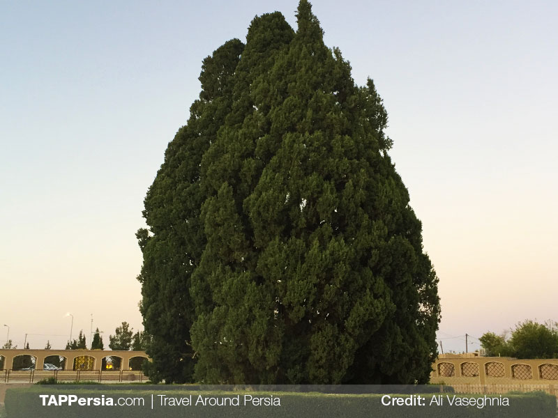 The Ancient Cypress Tree of Abarkouh - Yazd Top Attractions - TAP Persia