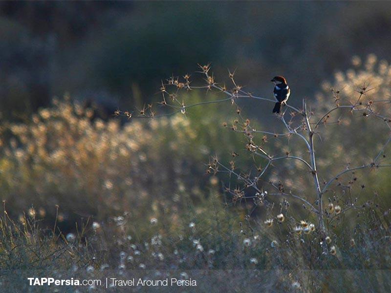 Bamou National Park - Iran