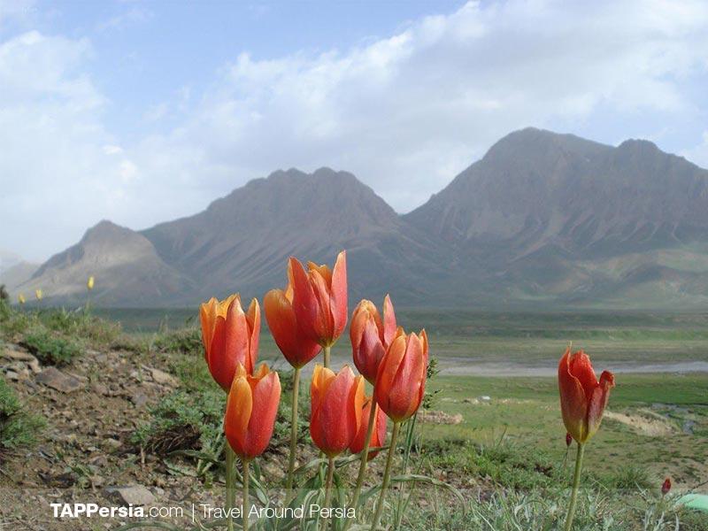 Khojir National Park - Iran