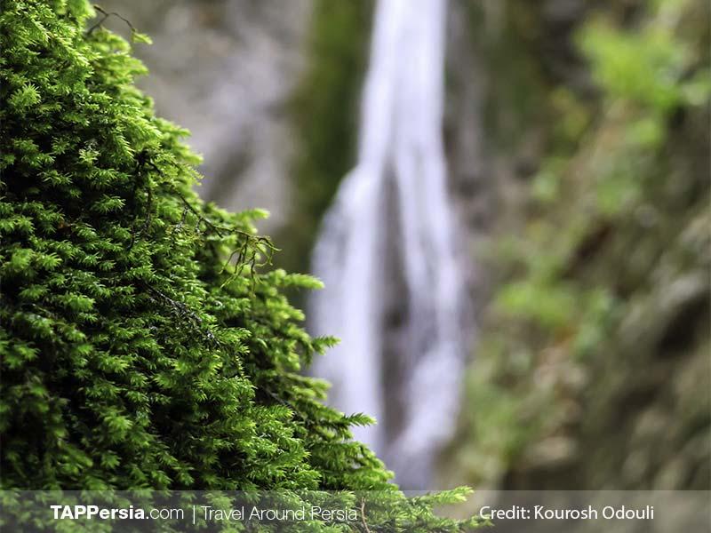 Golestan National Park - Iran