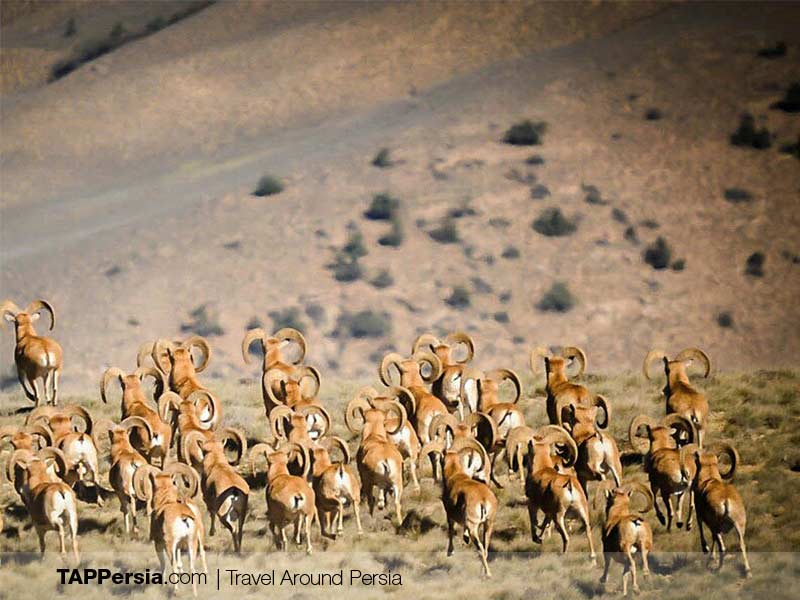 Khabr National Park - Iran