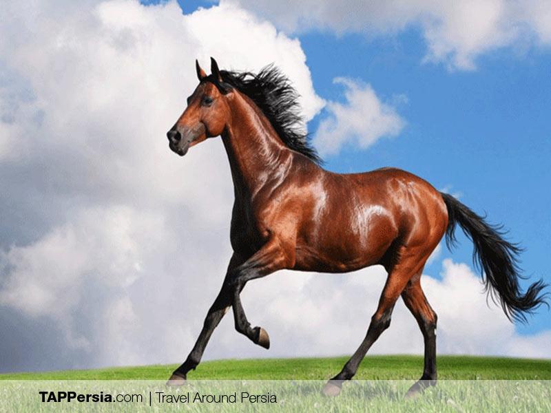 Iranian Turkmen - Iran - Turkmen Horses