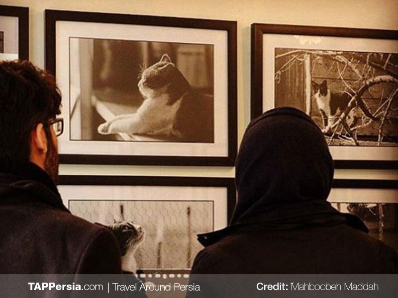 Persian Cat Museum - Tehran