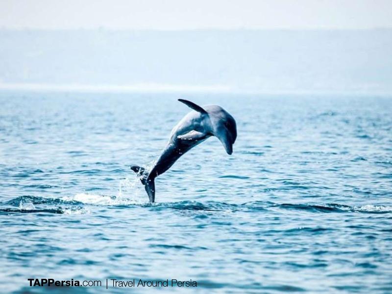 Top 10 Attractions In Qeshm Island - Qeshm Dolphins