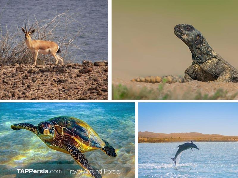 Top 10 Attractions In Qeshm Island - Wildlife