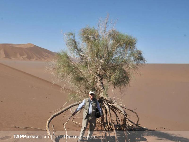 Lut Desert - Tamarisk - Iran