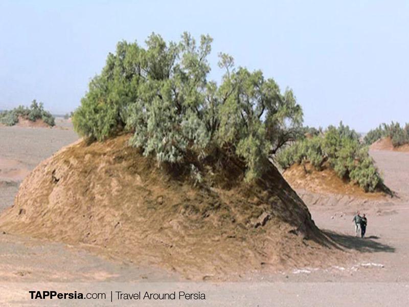 Lut Desert - Nebka - Iran