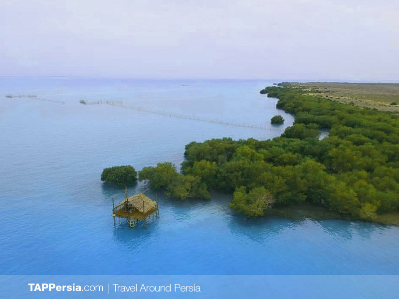 Top 10 Attractions In Qeshm Island - Hara Forest